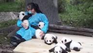 panda's knuffelen
