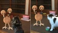 huisdier ziet Pokémon