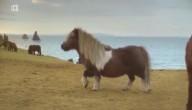 Dansende pony