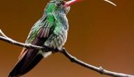 record vogels op de foto