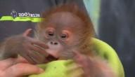 Rieke het aapje