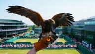 Rufus houdt een oogje in het zeil op Wimbledon