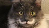 Kat met snor is internethit