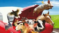 Alle dieren levend en vrij