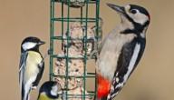 Vogels voederen