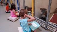 voorlezen voor honden
