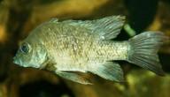 Zeldzame vis
