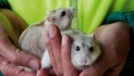 Boekentips: We gingen achter de hamsters aan