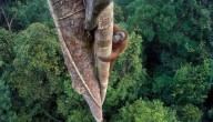 Tim Laman nam de mooiste natuurfoto van het jaar