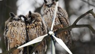 winmolen met uilen