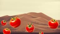 tomaten in de woestijn