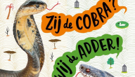 Zij de cobra? Wij de adder! : coole dieren vind je ook bij ons