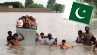 Karrewiet in Pakistan