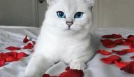 Coby de kat
