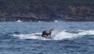 zeehond + walvis