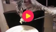 Beleefde kat