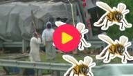 Bijenfile