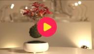 Zwevend bonsaiboompje