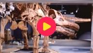 Dinoskelet New York