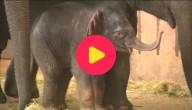 Baby-olifant Berlijn