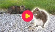 Kat en Eekhoorn
