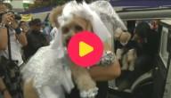 Hondjes trouwen