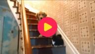bange hond