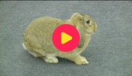 springende konijnen