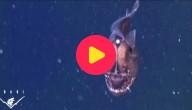 Duivelse diepzeevis