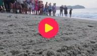 hulp voor zeeschildpadden
