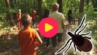 Teken in het bos