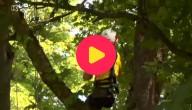 wedstrijd boomklimmen