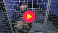 geldnood dierenasielen