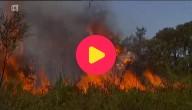 bosbrand