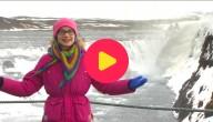 Karrewiet in IJsland