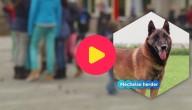 Hond verwondt leerlingen