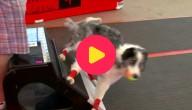 estafette voor honden
