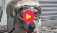 hond aardbeving Mexico
