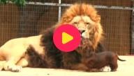 Hond en leeuw zijn vrienden