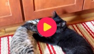 Kat geeft massage
