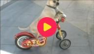Hond op fiets