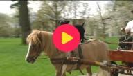 Hond en pony maken een ritje