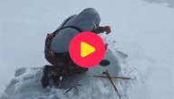 ijsvisser