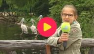 Lelijke dieren in de zoo