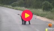 olifant achtervolgt vogels