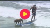 Surfwedstrijd voor honden