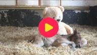 Pony en teddybeer