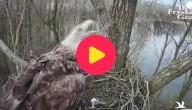 Vogels ruziën