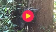 wasbeer klimt