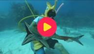 muziek onder water